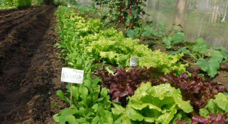 Expertos destacan importancia de la agroecología post Covid-19